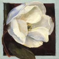 Magnolia I  Fine Art Print