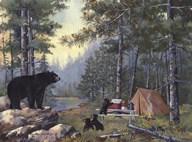 Bears Campsite  Fine Art Print