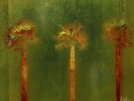 3 Palms II Art