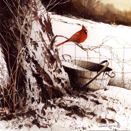Country Cardinal Fine Art Print By John Rossini At