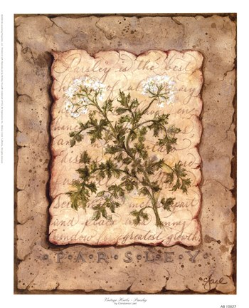 Framed Vintage Herbs - Parsley Print