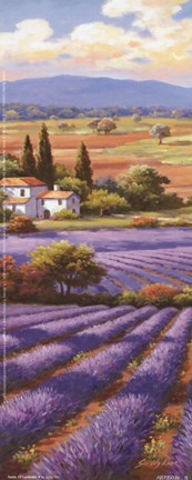 Framed Fields Of Lavender II Print