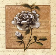 White Rose Square  Fine Art Print