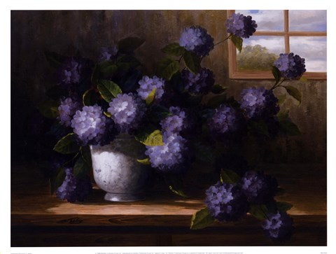Framed Hydrangea Blossoms II Print