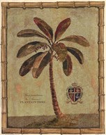 Caribbean Palm IV With Bamboo Border Art