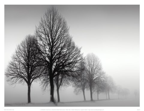 Framed Winter Trees III Print