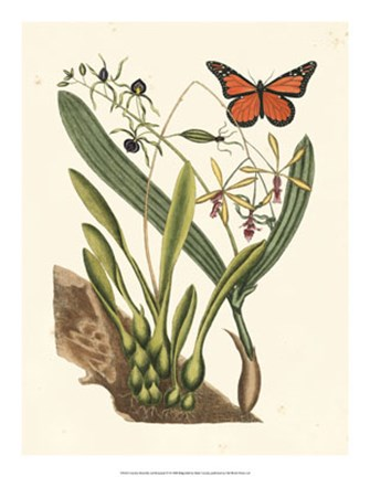 Framed Butterfly and Botanical IV Print