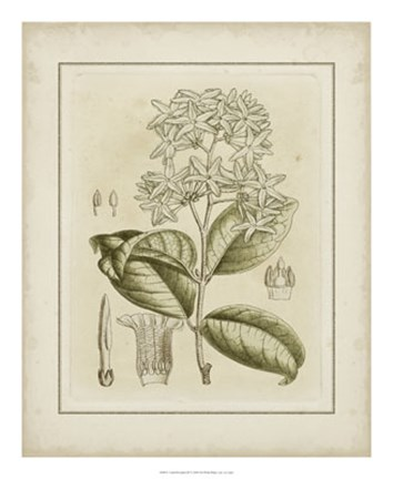 Framed Tinted Botanical III Print