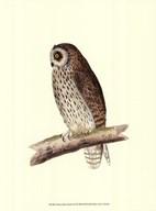 Short Eared Owl  Fine Art Print