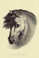 Equestrian Portrait I Art