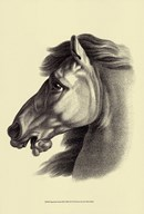 Equestrian Portrait III Art