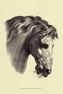 Equestrian Portrait IV Art