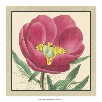 Framed Peony Collection I Print