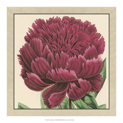 Framed Peony Collection V Print
