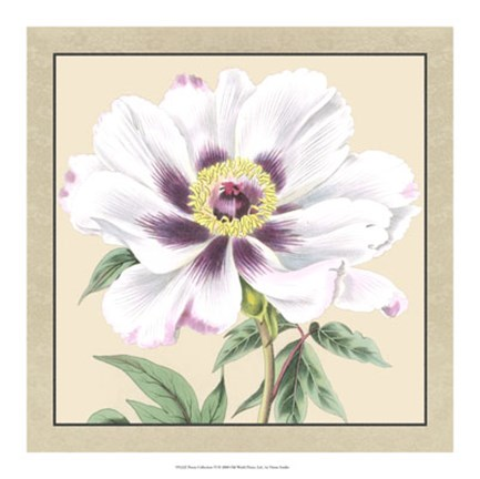 Framed Peony Collection VI Print
