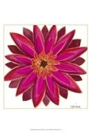 Bright Blossoms III  Fine Art Print