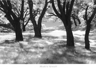 Blue Oaks  Fine Art Print