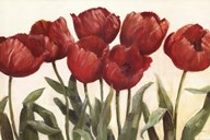 Ruby Tulips Art