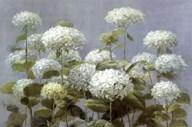 White Hydrangea Garden Art
