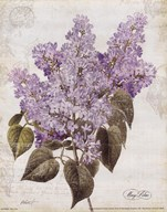 May Lilac