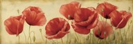 Poppies Grace II