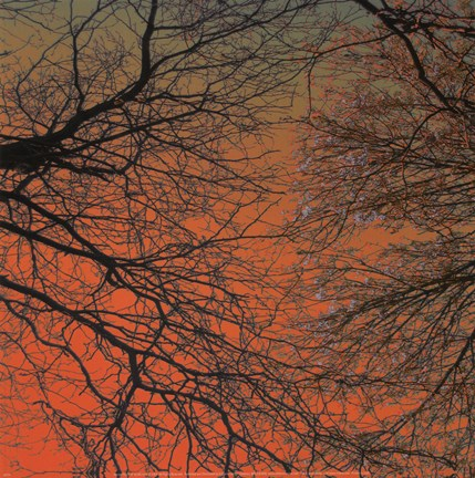 Framed Sunset Forest III Print