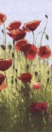 Mountain Poppies I Art
