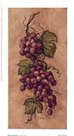 Vintage Grapevine l  Fine Art Print