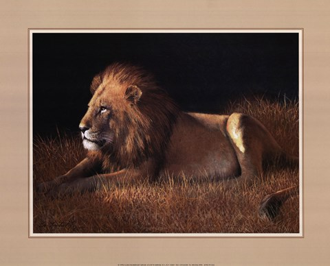 Framed Lying Lion Print