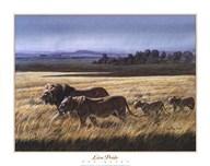 Lion Pride  Fine Art Print