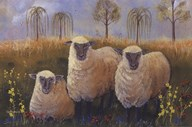We Three Sheep Art