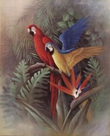 Exotic Birds Art