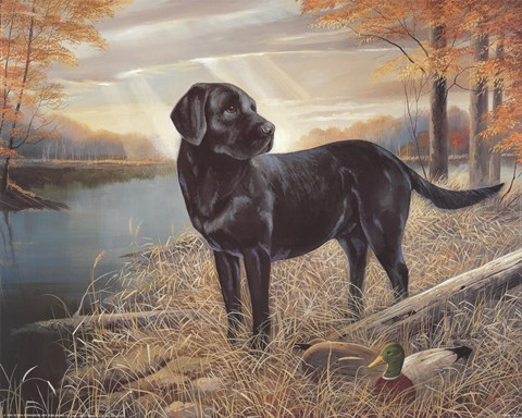 Black Lab With Decoys Fine Art Print By Ruane Manning At