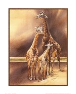 Family of Giraffes  Fine Art Print