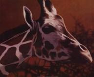 Giraffe Grande  Fine Art Print