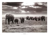 Amboseli Elephants  Fine Art Print