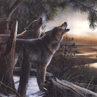 Call Of The Wild  Fine Art Print