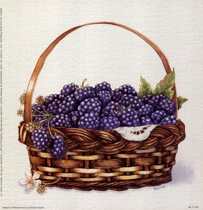 Basket Of Blackberries Fine Art Print By Bambi Papais At