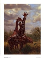 African Giraffes  Fine Art Print