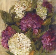 Hydrangea Delight I