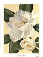Morning Magnolia Art
