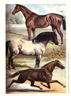 Johnson's Horse Breeds I  Fine Art Print