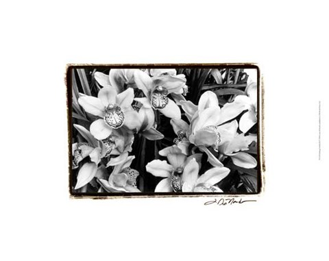 Framed Striking Orchids III Print