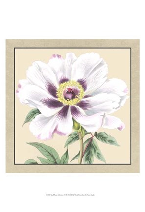 Framed Small Peony Collection VI (P) Print