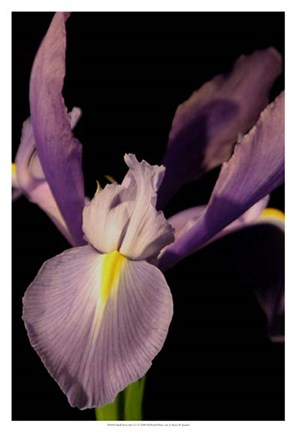 Framed Small Sweet Iris I (U) Print