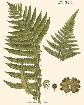 Framed Small Antique Fern III Print