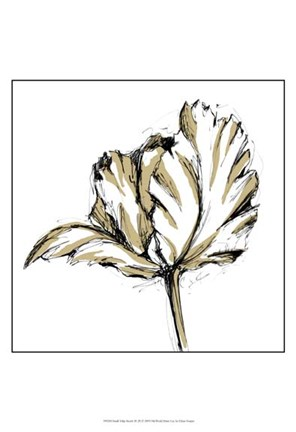 Framed Small Tulip Sketch III Print