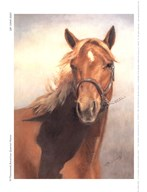 American Quarter Horse  Fine Art Print