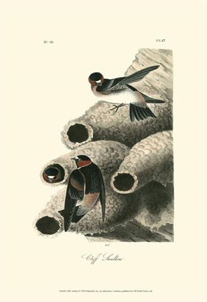 Framed Cliff Swallow Print