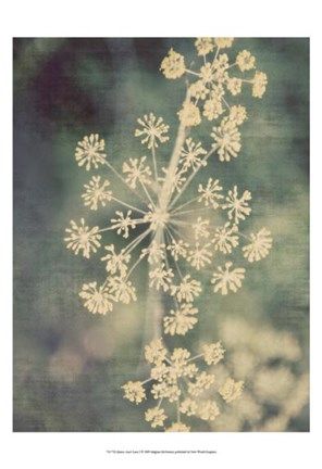 Framed Queen Ann's Lace I Print